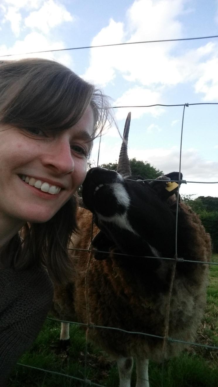 Sheep selfie!